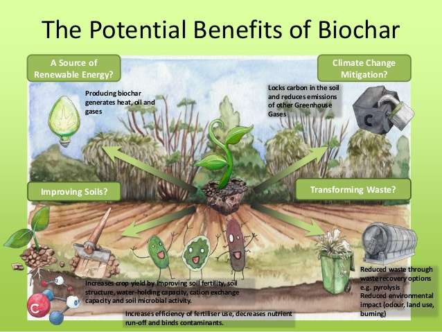 d uall benefits of biochar cafs uk 3 638